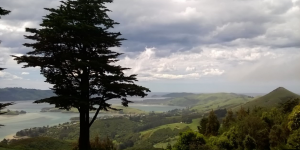Larnach castle view