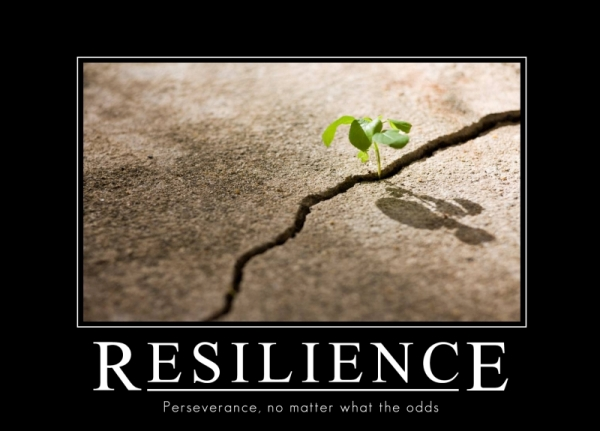 resilience 600 431