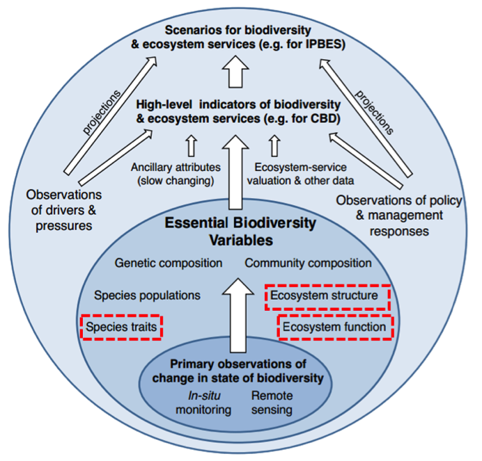Figure 2. Proof-of-concept Biodiversity Global Observing System framework developed by GEOBON members. EBVs that can be supported by EOS are highlighted by the red-dashed boxes. Image adapted from: Pereira et al. (2012).