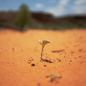 Plant sprouting on desert sand