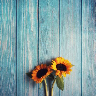 Image of two sunflowers - click to read blog