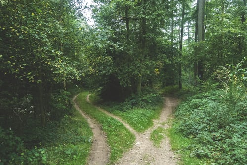 Two paths in a wood, heading in different directions