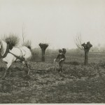 Photograph of a farmer ploughing a field in Ypres, 1915