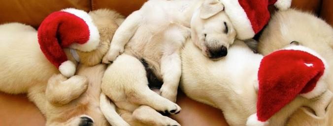 Xmas_Puppies