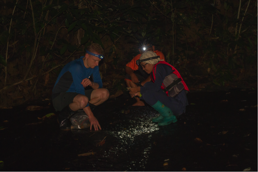 Night-time frogging! Assessing frog abundance and their diets in our study streams