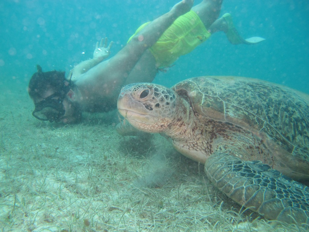 King's Water PhD student Nando Lewis dives with a turtle