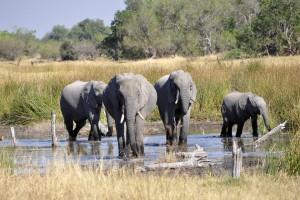 elephant-55051_960_720